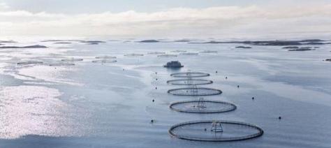 akvakultur_froya-wide_large-e1521666208912.jpg